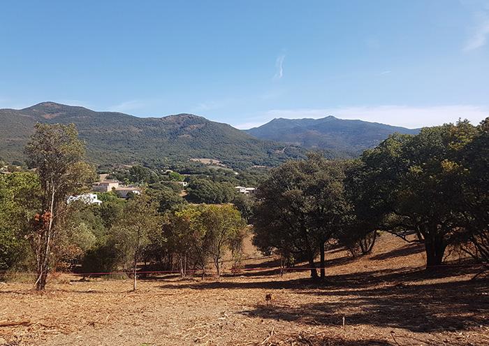 lotissement-olivaggio-plaine-de-pisciatello