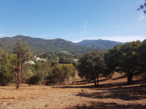 lotissement-olivaggio-plaine-de-pisciatello-A